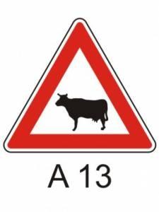 A 13 - zvířata